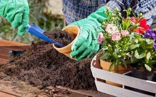 Сажать цветы: трактовка сновидения по соннику