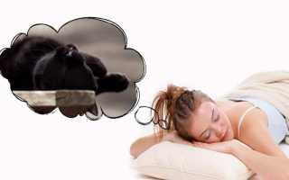 Убить кошку во сне: толкование образа по различным сонникам