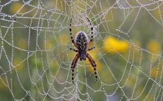 К чему снятся пауки и паутина по различным сонникам?