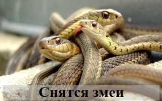 К чему снятся змеи: подробное толкование для мужчины и женщины