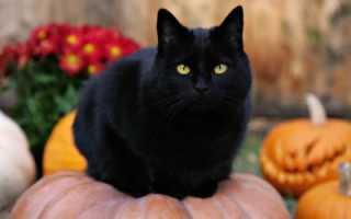 Что означает, если приснился чёрный кот?