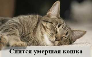 К чему снится умершая кошка: толкование по сонникам