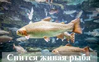 Тайный смысл снов: к чему снится живая рыба?