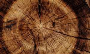 Древесный гороскоп друидов: характер по дню рождения, совместимость знаков