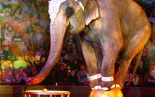 К чему снится слон?
