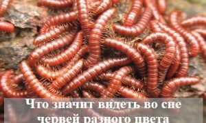 Что значит видеть во сне червей разного цвета