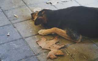 К чему снится умершая собака? Толкование снов