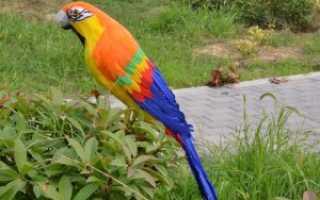 К чему снится попугай – толкование по сонникам