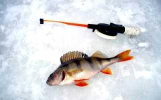 Приснилась рыбалка и рыба: что предвещает сон?