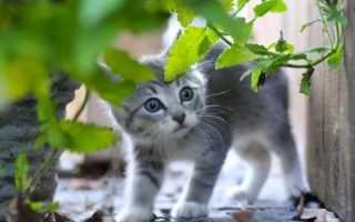 К чему приснился серый котёнок — толкование сонника