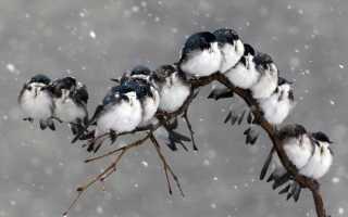 Видеть во сне птиц — толкование по сонникам
