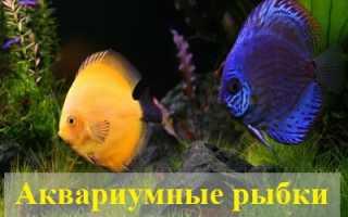 К чему снятся аквариумные рыбки?