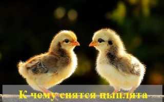К чему снятся цыплята мужчинам и женщинам