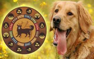 Собака, рождённая под знаком Водолея: характеристика для мужчины и женщины