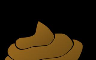 К чему снятся кошачьи или собачьи экскременты: толкование по сонникам
