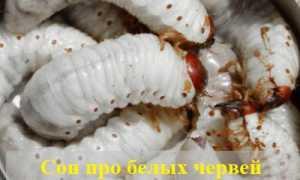 К чему снятся белые черви — что говорит сонник?