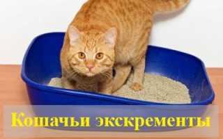 Сонник: к чему снятся кошачьи экскременты?