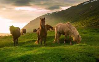 Сонник: как толковать сон про табун лошадей