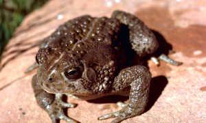 К чему снится жаба по различным сонникам?
