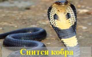 К чему снится кобра мужчине и женщине: толкования сонников