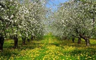 Видеть во сне цветущие деревья: трактовка в соннике