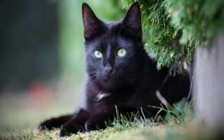 Видеть во сне чёрную кошку: трактовка сновидения