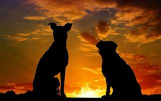 Народные приметы: к чему лает собака во дворе ночью