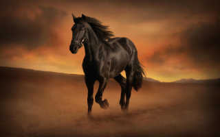 Приснилась черная лошадь: трактование сновидения различными сонниками