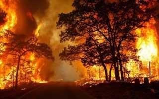 Снится пожар: толкование сновидения по соннику