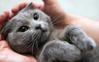 К чему снится трёхцветная кошка: толкование по сонникам