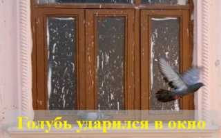 Голубь ударился в окно и улетел: значение приметы