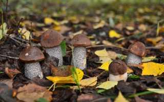 К чему снятся грибы мужчине или женщине по различным сонникам?