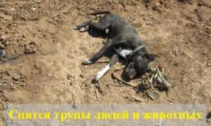 К чему снятся трупы людей и животных?