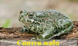 К чему снится жаба по различным сонникам