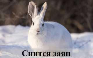 К чему снится заяц по версии различных сонников