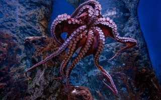 К чему снится осьминог: толкование образа по сонникам