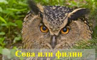 Приснилась сова или филин — толкование известных сонников