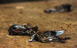 К чему снятся мертвые птицы: толкование по сонникам