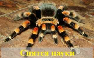 К чему снятся пауки большие и маленькие