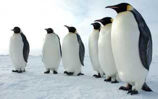 Что означает сон, в котором были пингвины?