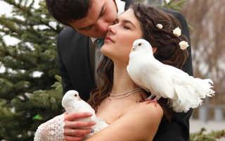 Белый голубь сел на подоконнике за окном: значение приметы