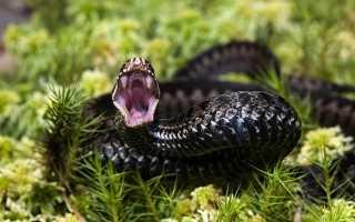 Приснилась змея, которая пыталась укусить — толкование сна для женщин