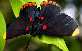 К чему снятся насекомые по различным сонникам?