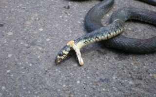 Толкования сонника: к чему снится мертвая змея