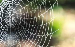 К чему снится паутина: толкования сонников
