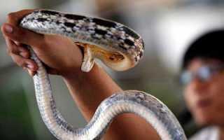 К чему снится укус змеи в разные части тела