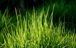 К чему снится трава: толкование в различных сонниках