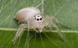Видеть во сне белого паука: толкование по сонникам