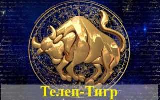 Телец, рожденный в год Тигра: характеристика для женщин и мужчин