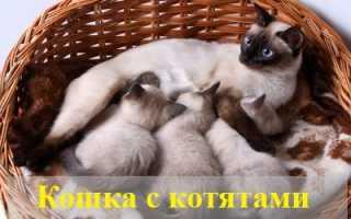 Видеть во сне кошку с котятами: трактовка ночного видения